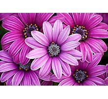 The Purple Five Photographic Print