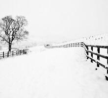 A Winter's Walk (2) by Heidi Stewart
