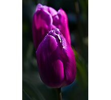 WOW factor Photographic Print