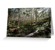 Forest Dreaming Greeting Card