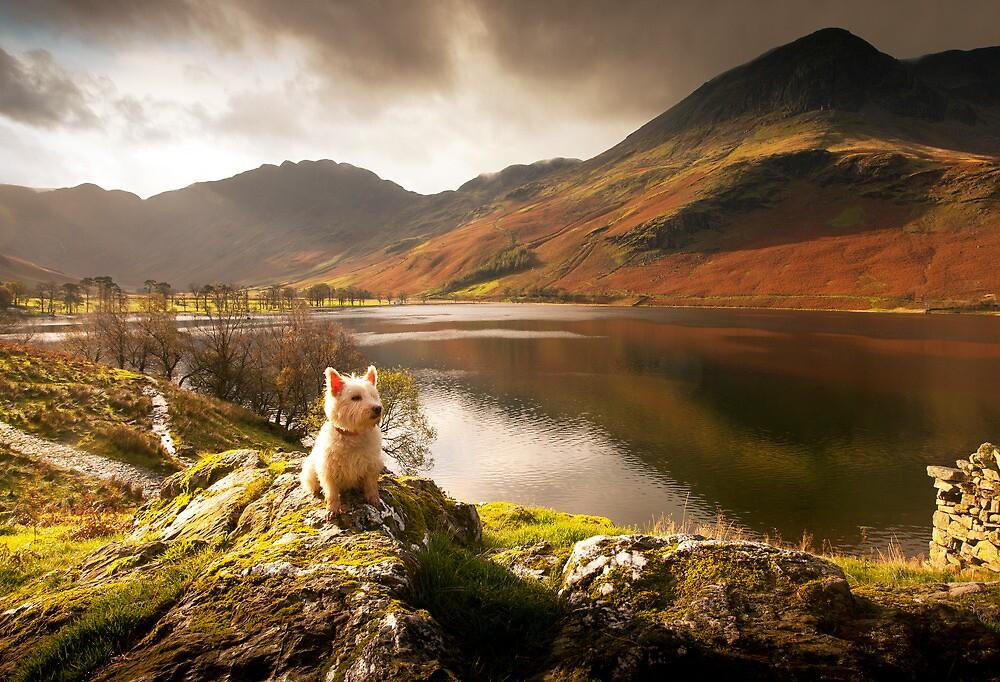Small Dog, Big World by Steve Langton