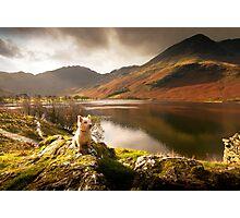 Small Dog, Big World Photographic Print