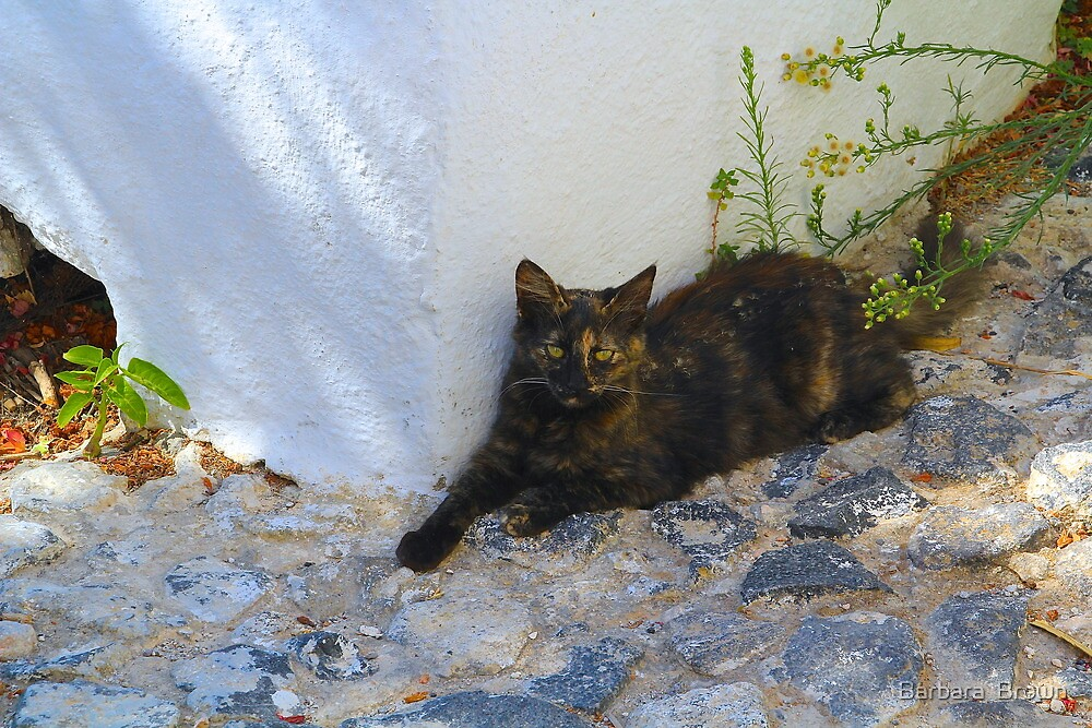Greek Cat by Barbara  Brown