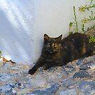 Greek Cat by Barbara  Brown