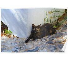 Greek Cat Poster