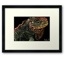 Andros Iguana (Colorized) Framed Print