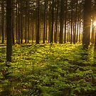 Woburn Forest Sunset by George Wheelhouse