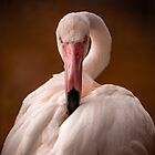 Flamingo Stare by George Wheelhouse