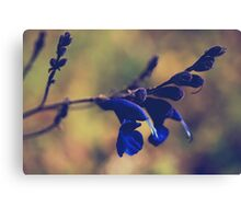 We're Two of a Kind Canvas Print