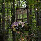 Window to the Forest by Debbie  Maglothin