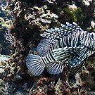 Lionfish by bubblehex08