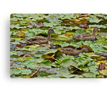 Ducks at the Lodge Canvas Print
