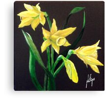 Daffodils, Nature's Trumpets Canvas Print