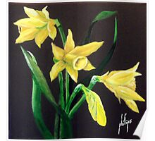 Daffodils, Nature's Trumpets Poster