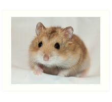 Dwarf Hamster Black Eyed Argente Art Print