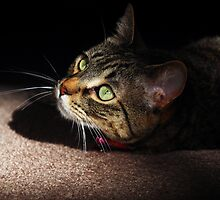 My Green Eyed Beauty by jodi payne