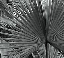 Palm Sunday by Bruce Bischoff