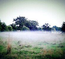 Misty dusk by bardenne
