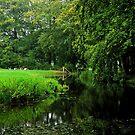 Resting in a green world by jchanders