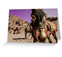 You want donkey ride mister?  Greeting Card