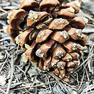 Pine Cone by heatherfriedman