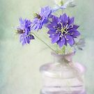 Love in a Mist by Colleen Farrell