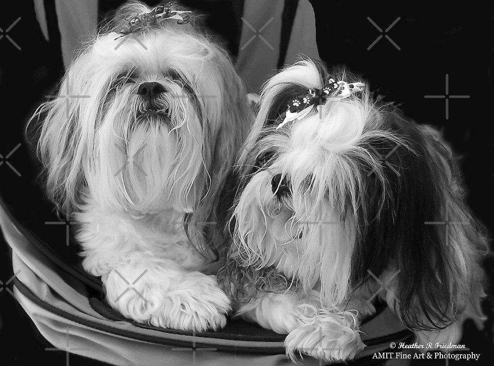 Two Cute Together! by Heather Friedman