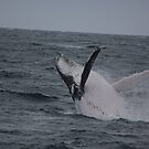 Having a Whale of a Time @ Port Macquarie! by Kymbo