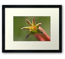 Kangaroo paw - wild flower of Western Australia Framed Print