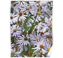 Asters in Fractalius Poster