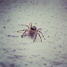 mr.spider 2 by sparkleshine