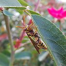paper wasp by sparkleshine