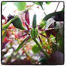 spider by sparkleshine