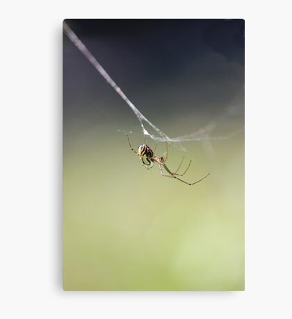 Hanging by a thread... Canvas Print