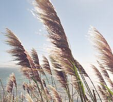 Reed Blowing in Wind by Ocean by visualspectrum
