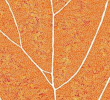 Fall colors  by TwinIndigo