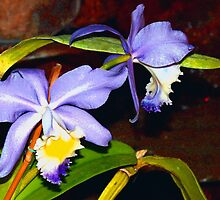 Pond orchids by ♥⊱ B. Randi Bailey