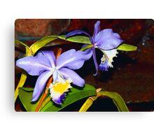 Pond orchids Canvas Print