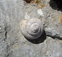 Shell on a wall by Eleanor11