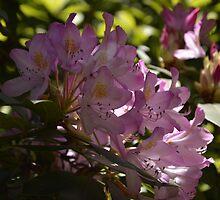 Flower Blooms by vanceadkins
