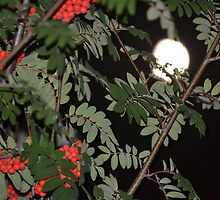 Rowan tree at night with moon (2) by adamg17