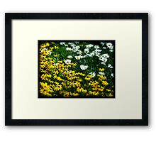 Daisy War No. 1 floral flower nature photography Framed Print