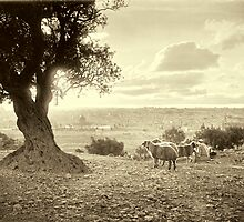 Shepherd and sheep in Mount of Olives - ca 1910 by Doug Heckaman