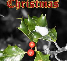 Merry Christmas - Holly by AyrshireImages