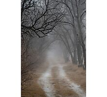 Dirt Road and Trees in the Fog Photographic Print