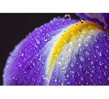 Close up image of purple iris Photographic Print