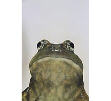 hey frog Photographic Print