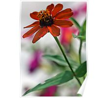 Profusion Orange Zinna with Pink Petunia Poster