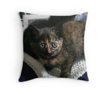 Tortie Kitten Throw Pillow