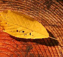 Fallen Fall Leaf by Randy Richards